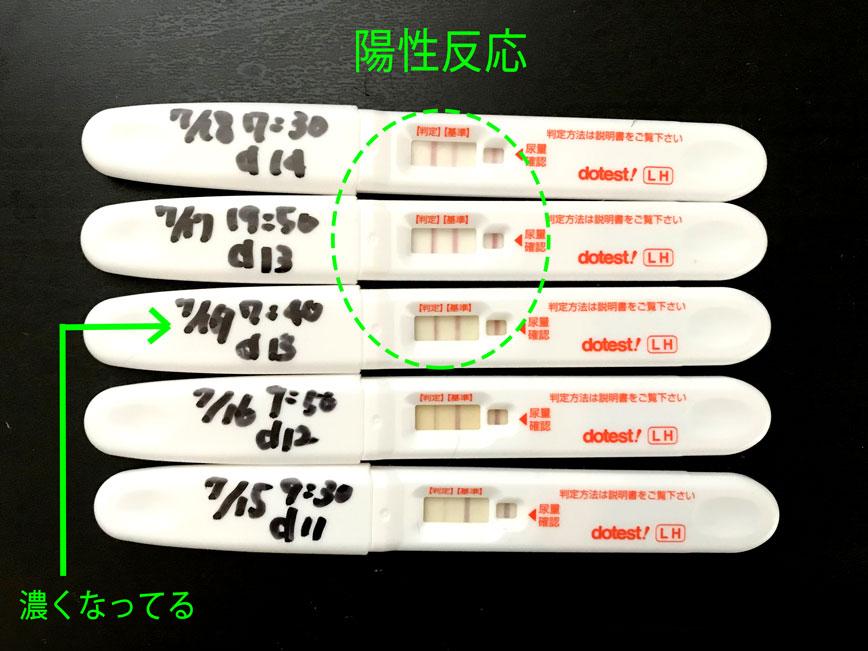 排卵検査陽性